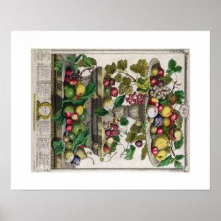 Pieter Casteels, Twelve Months of Fruits, June Poster