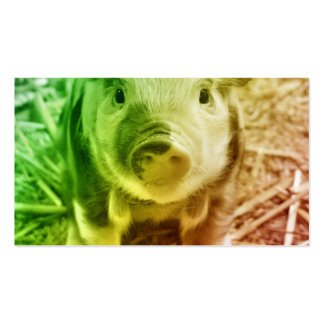 Pig Pack Of Standard Business Cards