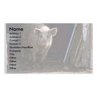 Pig Business Card Templates