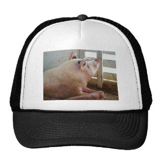 Pig Enjoying the Sun Mesh Hats