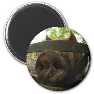 Pig Fisheye Fridge Magnets