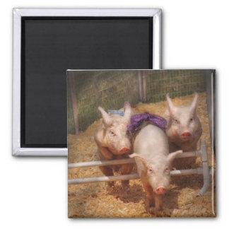 Pig - Getting past hurdles Refrigerator Magnet