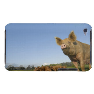Pig in a Field Barely There iPod Covers