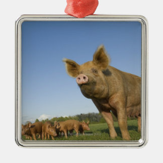 Pig in a Field Christmas Ornament