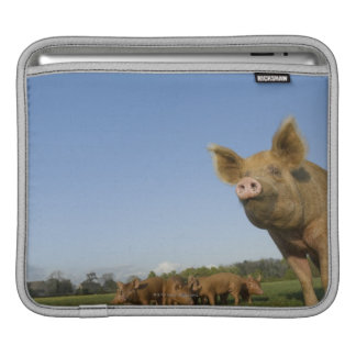 Pig in a Field iPad Sleeve