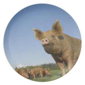 Pig in a Field Plate