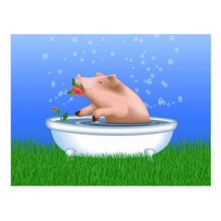 Pig in Bathtub Postcard