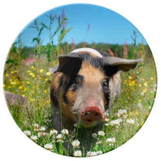 Pig in the Nature Plate