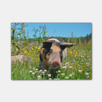 Pig in the Nature Post-it® Notes