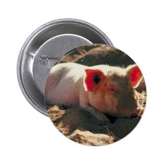 Pig in the Sun 6 Cm Round Badge