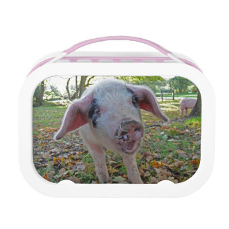 Pig lunchbox