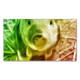 Pig Magnetic Business Cards