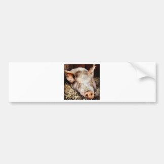 Pig of leisure bumper sticker