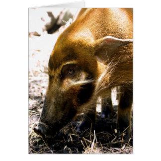 Pig Profile  1966 Greeting Card
