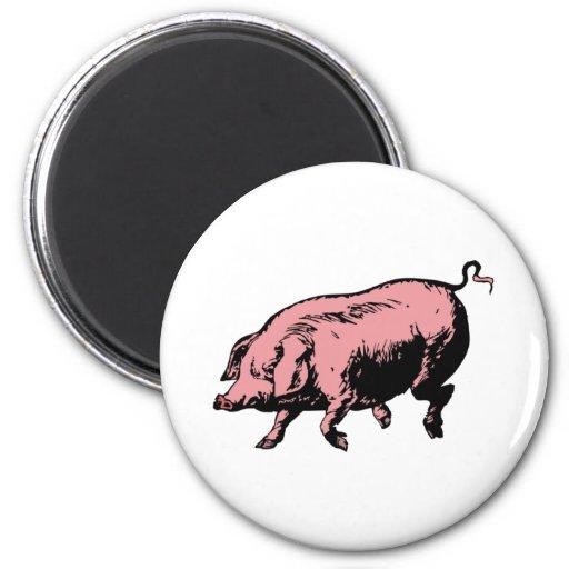 Pig sow pig hog fridge magnet