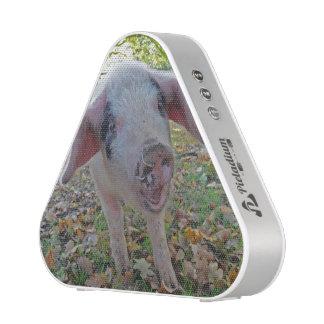 Pig speaker