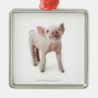Pig Standing Looking Up Christmas Ornament