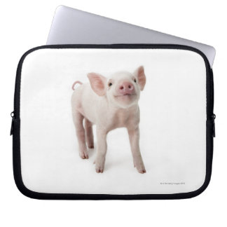 Pig Standing Looking Up Laptop Computer Sleeve