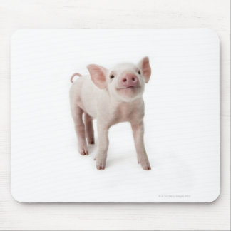 Pig Standing Looking Up Mouse Mat