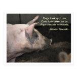 Pig Wisdom - Equals Post Cards