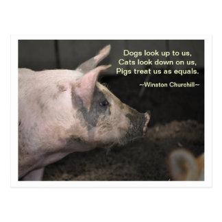 Pig Wisdom - Equals Postcard