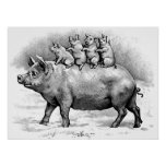 Pig with Piglets Poster