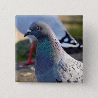 Pigeon 15 Cm Square Badge