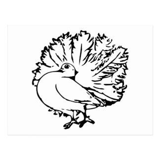 Pigeon 4 Black and White Illustratiom Postcards