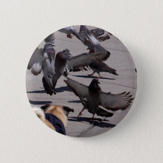 Pigeon 6 Cm Round Badge