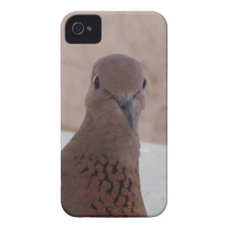 Pigeon Blackberry Bold case, customizable iPhone 4 Cover