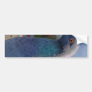 Pigeon Bumper Sticker