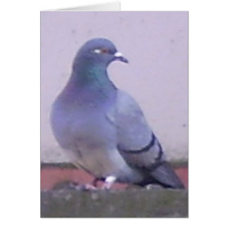 Pigeon Cards