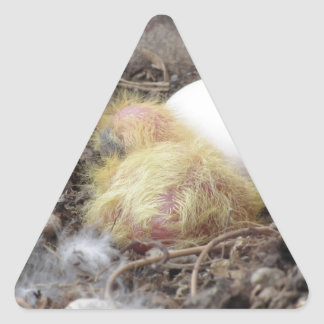 Pigeon chick in the nest with his brother egg triangle sticker