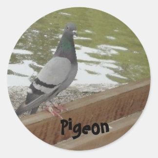 Pigeon Classic Round Sticker