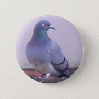 Pigeon copy 6 cm round badge