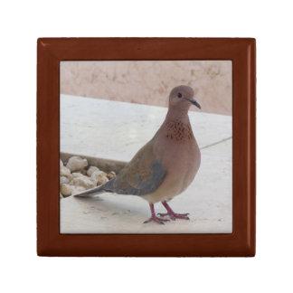 Pigeon gift / jewelry / trinket / keepsake box