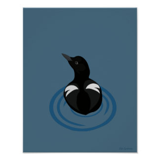 Pigeon Guillemot Vector 11x14 Semi-Gloss Poster