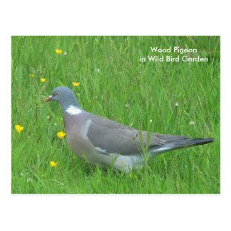 Pigeon image for postcard