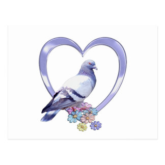 Pigeon in Heart Postcard