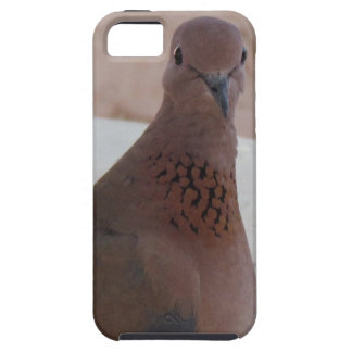 Pigeon iPhone 5 Case-Mate, customizable Case For The iPhone 5