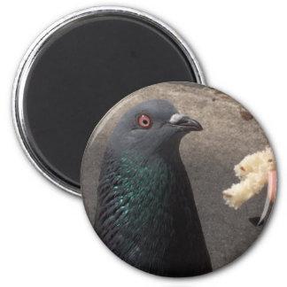 pigeon magnets