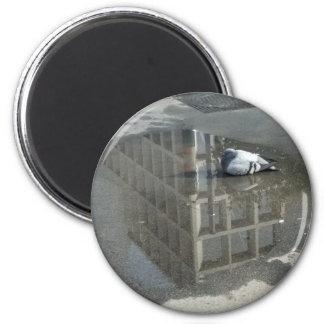 Pigeon Mirror Water Magnet