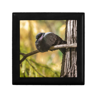 pigeon on lake small square gift box