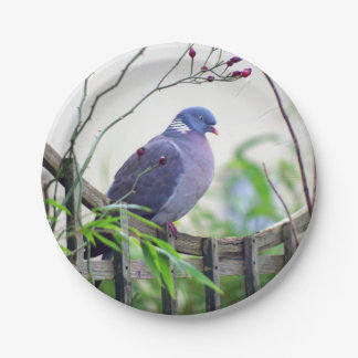 Pigeon on the fence plate 7 inch paper plate