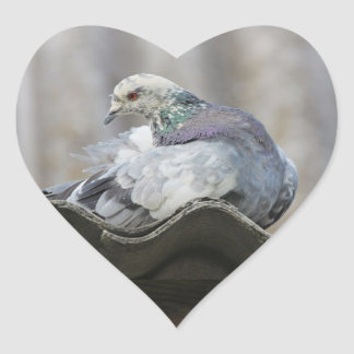 Pigeon on the roof. heart sticker
