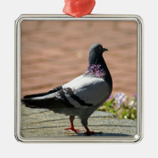 Pigeon Photograph Christmas Ornament