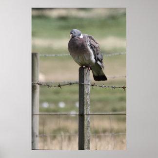 Pigeon Post Poster