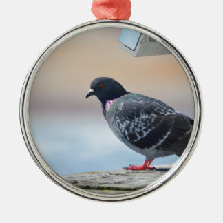 Pigeon Silver-Colored Round Decoration