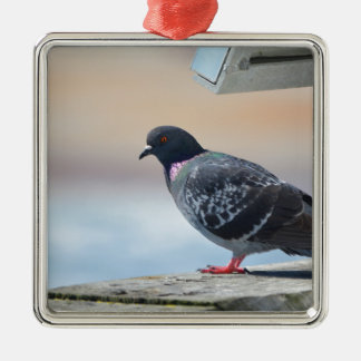 Pigeon Silver-Colored Square Decoration