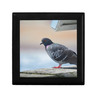 Pigeon Small Square Gift Box